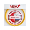 MSV Co.- Focus